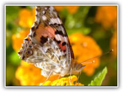 Red and Orange Butterfly on a yellow flower