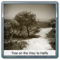 Tree on the Way to Haifa