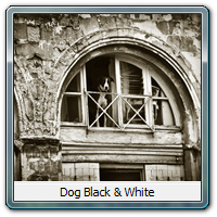 Dog Black & White