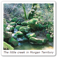 The little creek in Morgan Territory