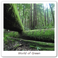 World of Green